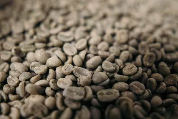 Torrefazione del caffè verde